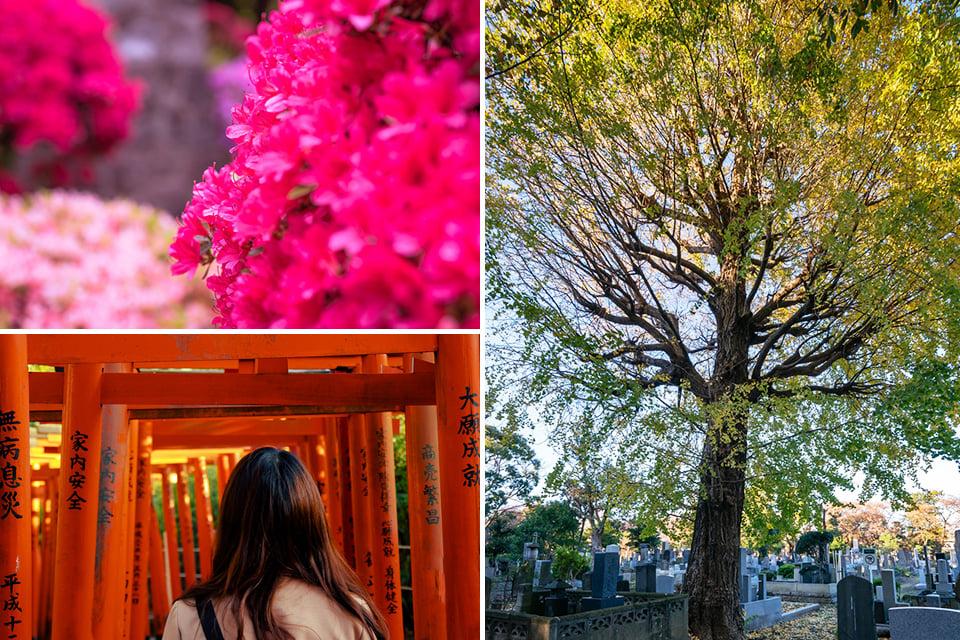 根津神社や谷中霊園